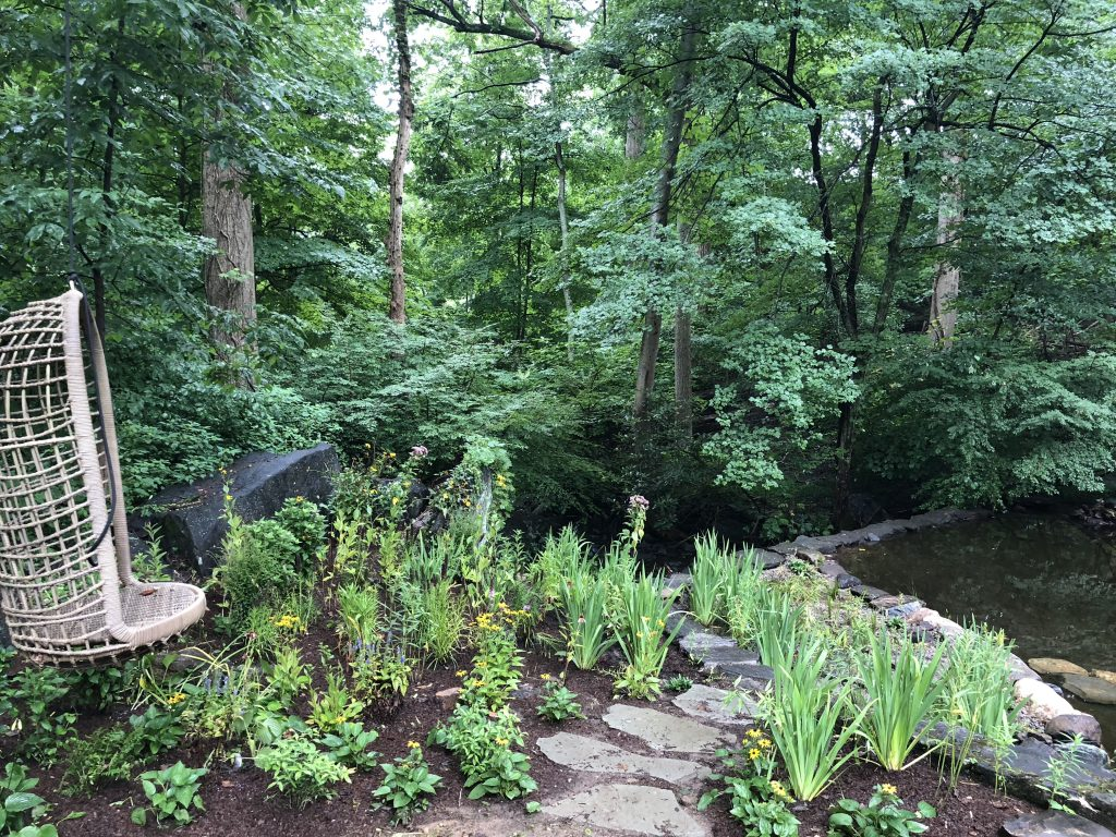 Pond Restoration & Native Bog Garden in White Plains [VIDEO]