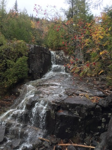 Fall Observations from a Landscape Ecologist