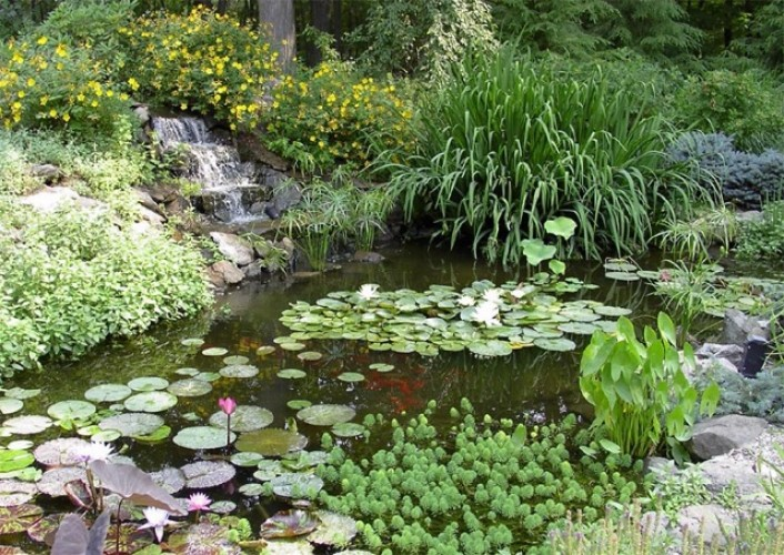 Water Garden Design, Construction and Maintenance – Croton-on Hudson to Pound Ridge NY