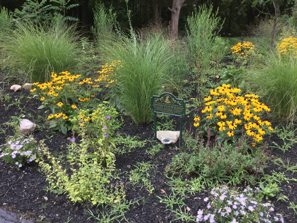 Landscape Design, Ecological Restoration, Sustainability and Resilience in Westchester
