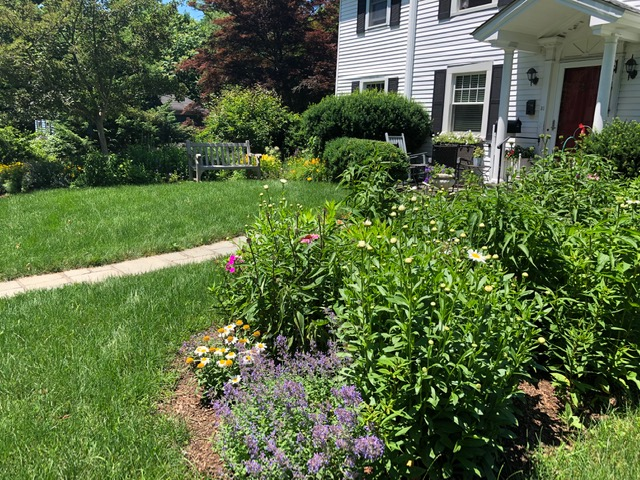 Native Plant Landscape Design in White Plains, New York